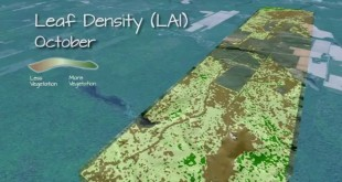 Visualization of LiDAR Derived Leaf Area Index (LAI) Data