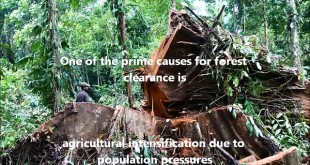 The role of Remote Sensing in Deforestation