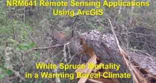 Remote Sensing Applications Using ArcGIS : Winter Warming and Tall White Spruce Mortality