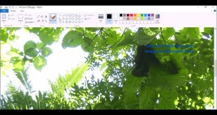 Calculating Percentage Vegetation Cover Using Zenith Angle Photograph