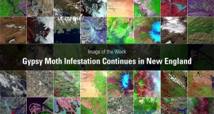 Image of the Week: Gypsy Moth Infestation Continues in New England